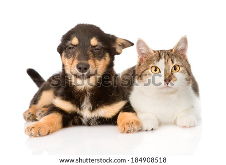 puppy and kitten lying together. isolated on white background - stock photo