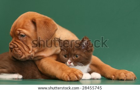 Puppy and kitten on a green backgrounds. - stock photo