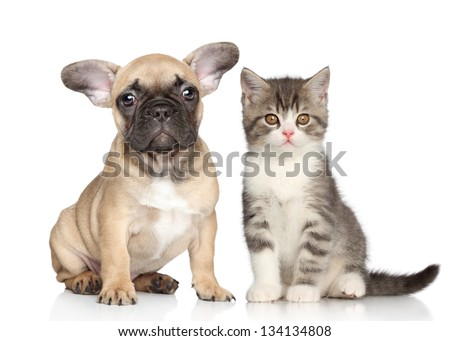 Puppy and Kitten on a white background - stock photo