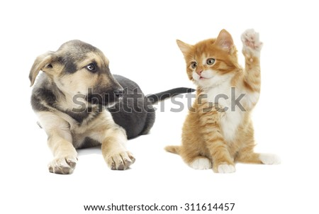 Puppy and kitten on a white background isolated