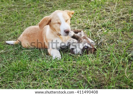 Puppy and kitten playing on the meadow - stock photo