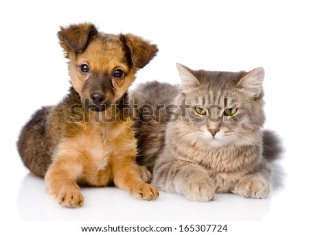 puppy and kitten together. isolated on white background