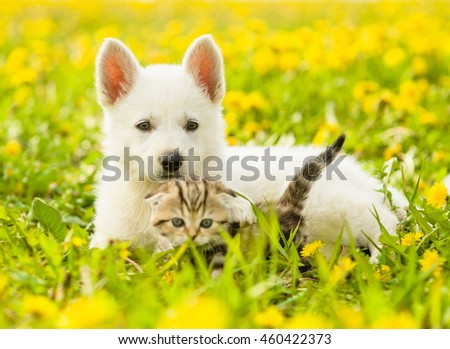 Puppy and kitten together on a dandelion field.