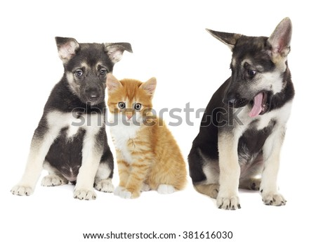 puppy and kitten together on a white background