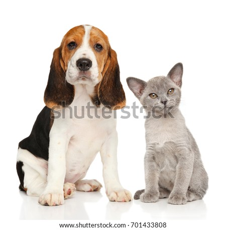 Puppy and kitten together. Portrait on white background