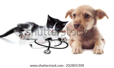 puppy and kittens