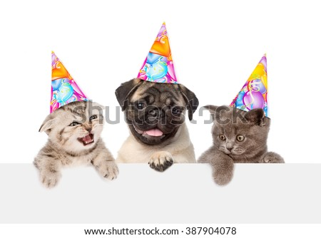 Puppy and kittens in birthday hats peeking from behind empty board. isolated on white background