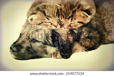 puppy and kittens sleeping together - stock photo