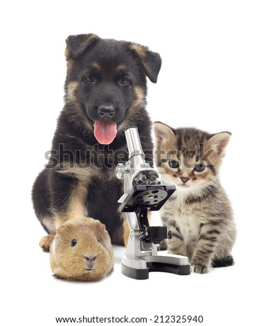 Puppy and microscope - stock photo