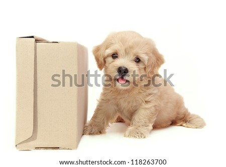 Puppy and paper box  on white background - stock photo
