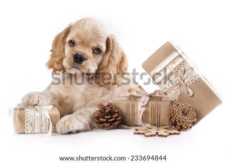 puppy and  Vintage gift box - stock photo