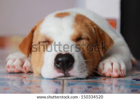 Puppy asleep. - stock photo