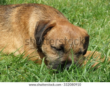 Puppy asleep on the grass