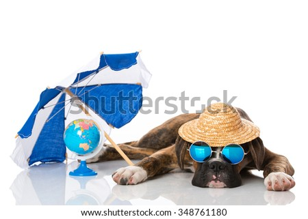 Puppy at holiday - stock photo
