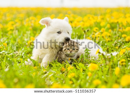 Puppy bites for a kitten's ear on the lawn of dandelions