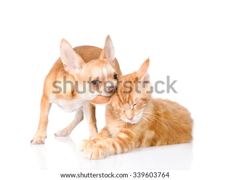 puppy bites the cat's ear. isolated on white background - stock photo