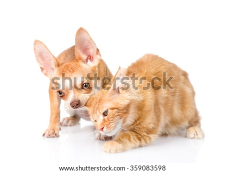 Puppy bites the cat's ear. isolated on white background