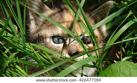 Puppy Cat isolated into nature