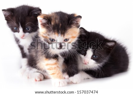 puppy cat on white background - stock photo