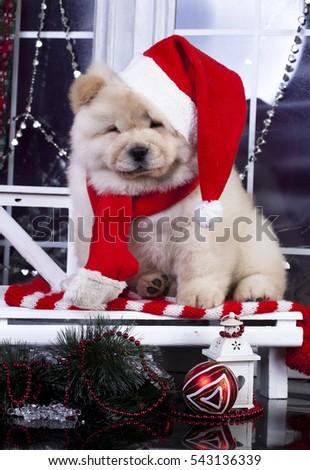 puppy christmas chow chow - Christmas Puppy Chow