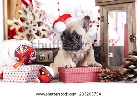 puppy christmas French Bulldog - stock photo
