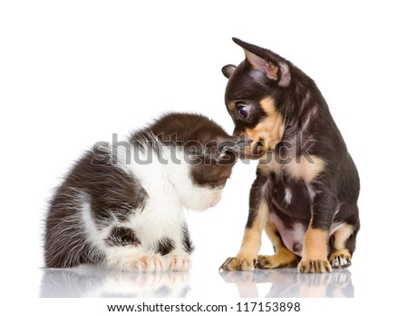 puppy dog and sad kitten. Isolated on a white background