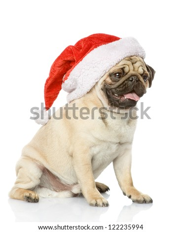puppy dog in red christmas Santa hat, isolated on white background - stock photo