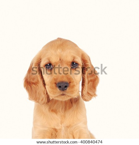 puppy dog isolated over white background