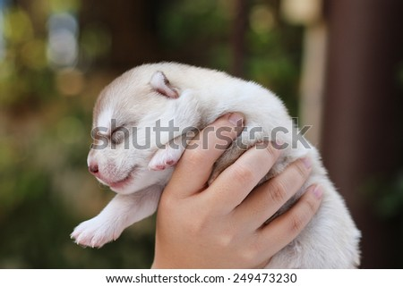 puppy dog on hand in nature. - stock photo