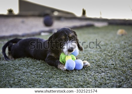Puppy Dog playing with a toy