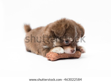 Puppy eating bone on white background