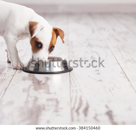 Puppy eating foot. Dog eats food from bowl - stock photo