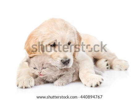 Puppy hugging a small kitten. isolated on white background