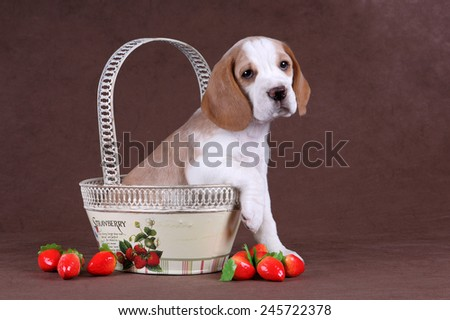 Puppy in a basket with strawberries