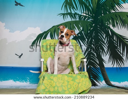 Puppy in a beach chair with her head tilted on a beach scene - stock photo