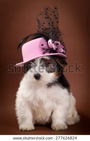 Puppy in a hat looking at the camera  - stock photo