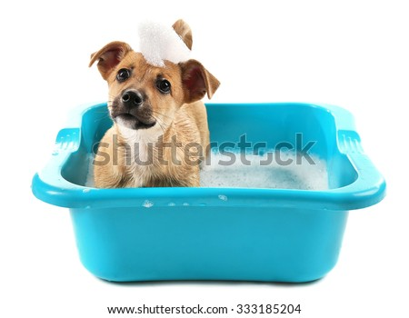 Puppy in bath isolated on white - stock photo