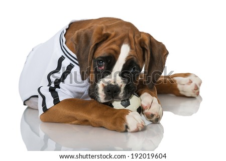 Puppy in football jersey isolated on white