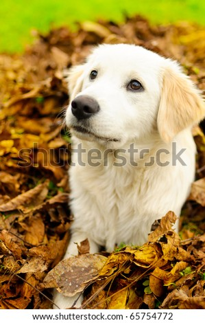 Puppy in leafs - stock photo