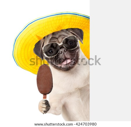 Puppy in sunglasses holding popsicle and peeking from behind empty board. isolated on white background - stock photo