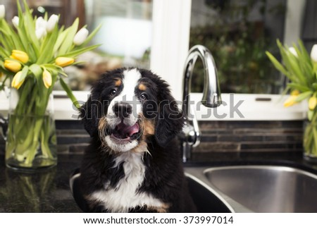 puppy in the sink  - stock photo