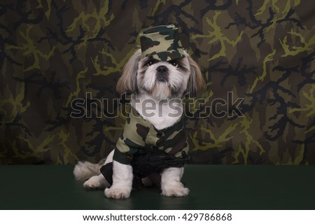 Puppy in the suit of the military is ready to serve in the army - stock photo