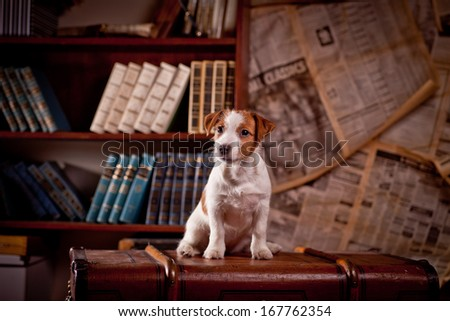 puppy, Jack Russell Terrier, retro, books