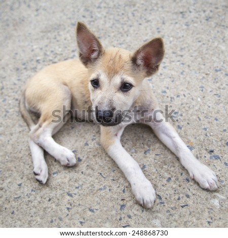 Puppy lay down on cement floor and looking. - stock photo