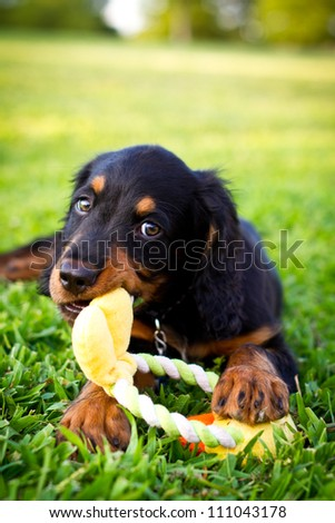 Puppy laying in the grass chewing on a dog toy - stock photo