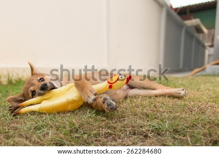 Puppy laying on the grass with a chicken toy