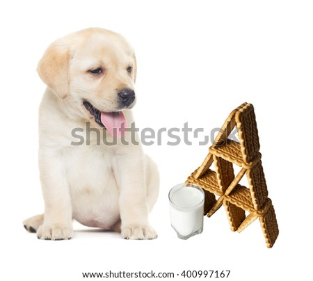 puppy looks; cookies and milk on white background