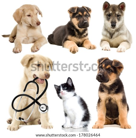 puppy looks,  set - stock photo