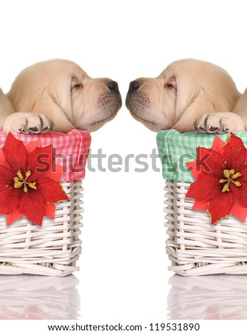 Puppy love, sleeping puppies in red and green Christmas baskets. - stock photo