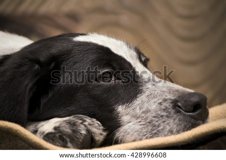 Puppy lying on the floor, close-up - stock photo